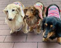 20年9月17日歯がぶっ飛んだ(^◇^;) - 旅行犬 さくら 桃子 あんず 日記