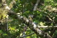 2020-160 遠くのアオゲラ - 近隣の野鳥を探して2