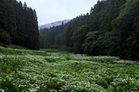 御杖岡田の半夏生園(後編) - 花景色-K.W.C. PhotoBlog
