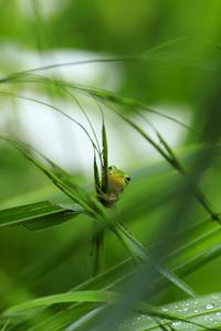 御杖村で出会った小さなお友達 - 花景色-K.W.C. PhotoBlog
