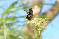 ボロボロの蝶 - はっぴいでいず