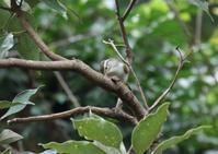 K山公園 - 写真で綴る野鳥ごよみ