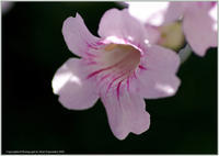 庭の花-35今咲いている花 - 野鳥の素顔 <野鳥と日々の出来事>