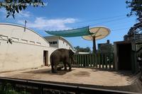 2020年8月王子動物園4その1朝のイーリス - ハープの徒然草