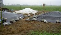 何故、有機質肥料の保管を管理点としたのでしょう - すてきな農業のスタイル