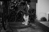 猫と出会った金曜日 - 光の贈りもの