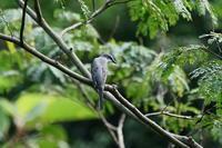 秋の鳥たち・・! - さすらい写人
