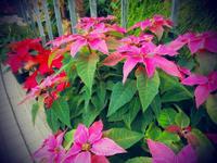 自然の織りなす姿に惚れる - 昭和の家+庭とお片付け