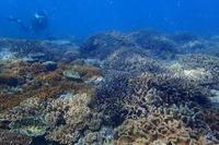 20.9.18Mさん・・間に合いました。 - 沖縄本島 島んちゅガイドの『ダイビング日誌』