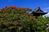 慶恩寺のサルスベリ - 花景色-K.W.C. PhotoBlog