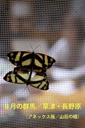 8月の群馬/草津・長野原(山荘の蛾) - 還暦からのネイチャーフォト