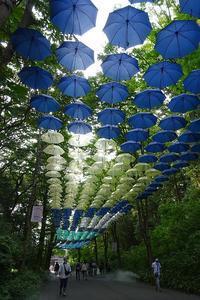 傘の花が涼しさを演出 - さんじゃらっと☆blog2