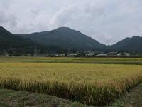 たくみの里(1) ~稲田とそば畑~ (2020/9/16撮影) - toshiさんのお気楽ブログ