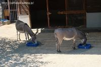 2020年8月王子動物園4その2午後の旦旦 - ハープの徒然草