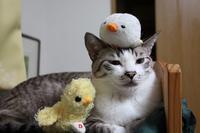 おつきあい - ぎんネコ☆はうす