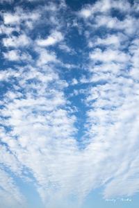 昇り雲♪ - Lovely Poodle