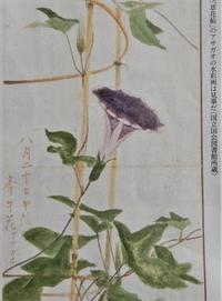 元祖ハンケチ王子、子規(Prince Handkerchief, Shiki) - ももさへづり*やまと編*cent chants d'une chouette (Yamato*Japon)