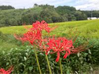 秋の風景 - 自然を見つめて自分と向き合う心の花