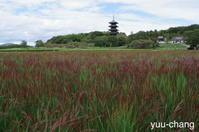 備中国分寺の赤米 - 下手糞でも楽しめりゃいいじゃんPHOTO BLOG