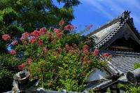 初秋の花咲く橘寺 - 花景色-K.W.C. PhotoBlog