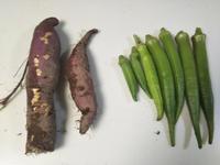 10分ほどの畑・・・オクラとさつま芋 - 化学物質過敏症・風のたより2