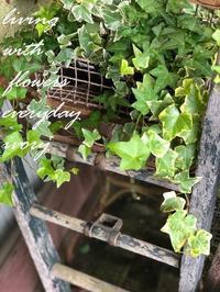 シルバーウィークSTART‼︎ -  Flower and cafe 花空間 ivory (アイボリー)