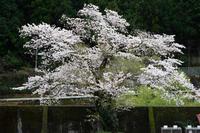 Mar. 2020#003 - hama-take の blog
