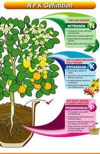 作物が求めるNPK - すてきな農業のスタイル