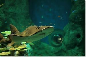 SATOYAMA水族館 Ⅱ - ハチミツの海を渡る風の音