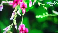 ハギの花 - 自然を見つめて自分と向き合う心の花