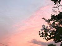 夕暮れの百日紅 - マリカの野草画帖
