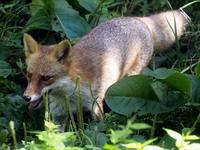 日本生態園の動物たち - 動物園放浪記