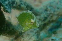 20.9.20連休、始まっております! - 沖縄本島 島んちゅガイドの『ダイビング日誌』