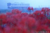 紅い季節 - PTT+.
