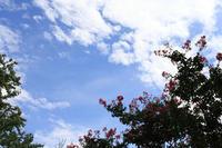 ピンクと白の百日紅 - 写真の記憶