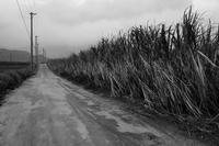 想い出はモノクローム - 沖縄 Part.51 - - 夢幻泡影