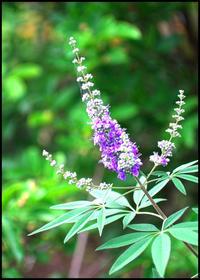 薄紫色とスパイシーな香り - ☆彡 四季写遊 ☆彡