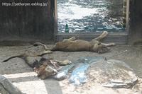 2020年8月王子動物園5その2ごろごろアトス - ハープの徒然草