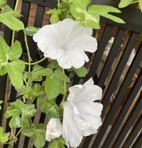 花 - 好きなものに囲まれて2