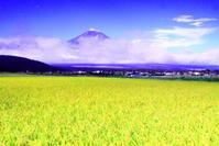 令和2年9月の富士(5)忍野の田園の富士 - 富士への散歩道 ~撮影記~