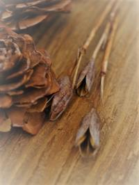 めぐる季節 - hibariの巣