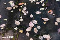 「足もとの秋」 - 藍の郷