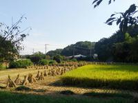 秋の舞岡公園と周辺の旅 #1 - 神奈川徒歩々旅