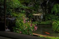実光院の秋海棠 - 花景色-K.W.C. PhotoBlog