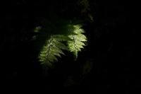 光の侵入 - フォトな日々