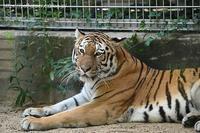 2020年8月王子動物園6その1 - ハープの徒然草