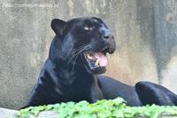 2020年8月王子動物園7 - ハープの徒然草
