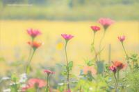 champ de fleurs d'automne - bons souvenirs