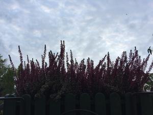 今日から秋。きっぱり。 - Rosa dei Venti