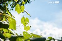 「蔓」 - 藍の郷